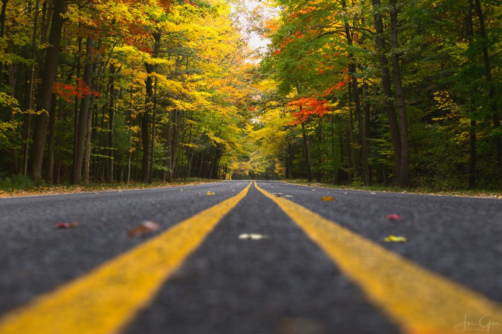 Road with fall colored trees